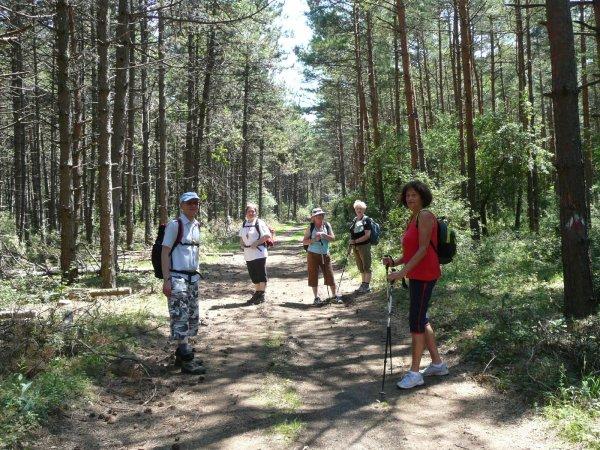 V lesoch severných Malých Karpát