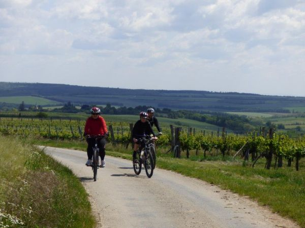 Na ceste medzi vinohradmi II.